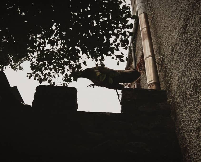 Strange bird jumping on wall