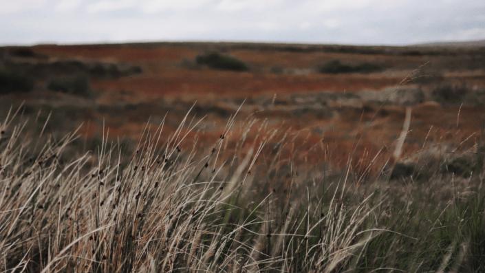 Landscape view at Ireland fields.